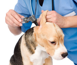 Flea, Tick, and Heartworm Prevention